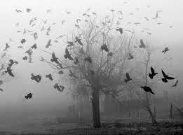 Como é formado um nevoeiro