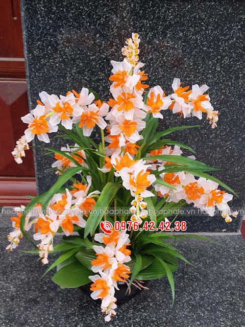Hoa lan rủ trắng cam