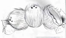 desenho de cocos