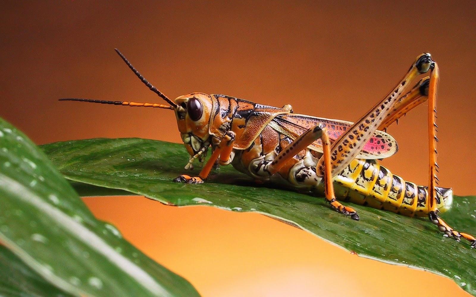 http://1.bp.blogspot.com/-qXDX4hDCLr0/UgqS_NvvANI/AAAAAAAAVMA/JY0yqnegmyA/s1600/cricket-wallpaper-x-.jpg