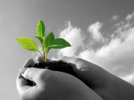clave para frenar la pérdida de la biodiversidad