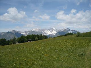 Gipfelwiese mit Adamello im Hintergrund