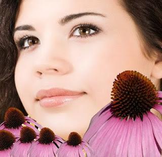 Soğuk algınlığı, grip, Romatizmal artrit, allerji, koni çiçeği, bakteri, mikrop ve virüsler, Üst solunum yolları enfeksiyonları, sinüzit tedavi, şifalı bitkiler alternatif tedavi