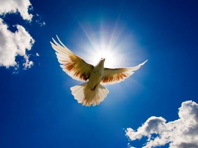 Dove Flying Before The Sun HD Wallpaper