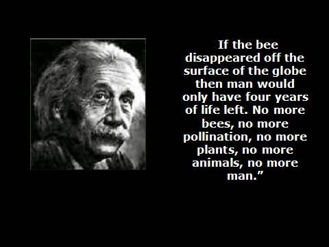 If the bee disappeared off the face of the earth, man would only have four years left to live.