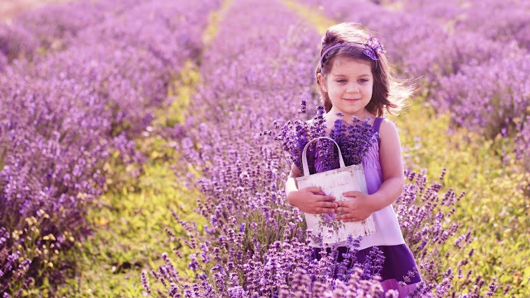 Thế giới Lavender/Hoa oải hương
