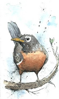 robin illustration drawing by ammon perry for a charity auction in harrisburg pa