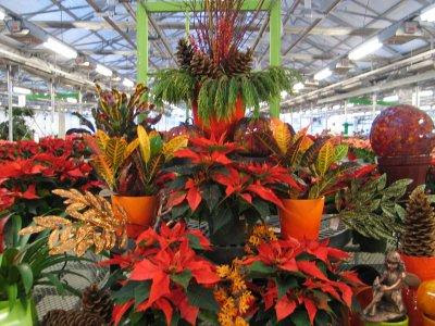 Christmas Garden Center Displays