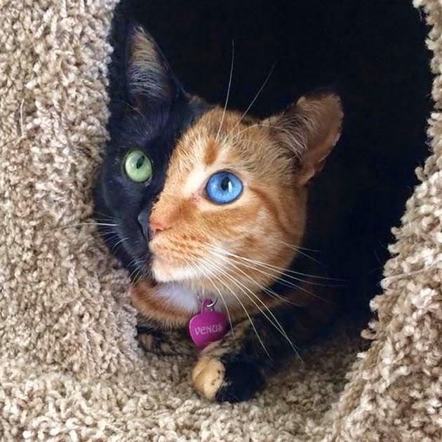 beautiful-cat-1