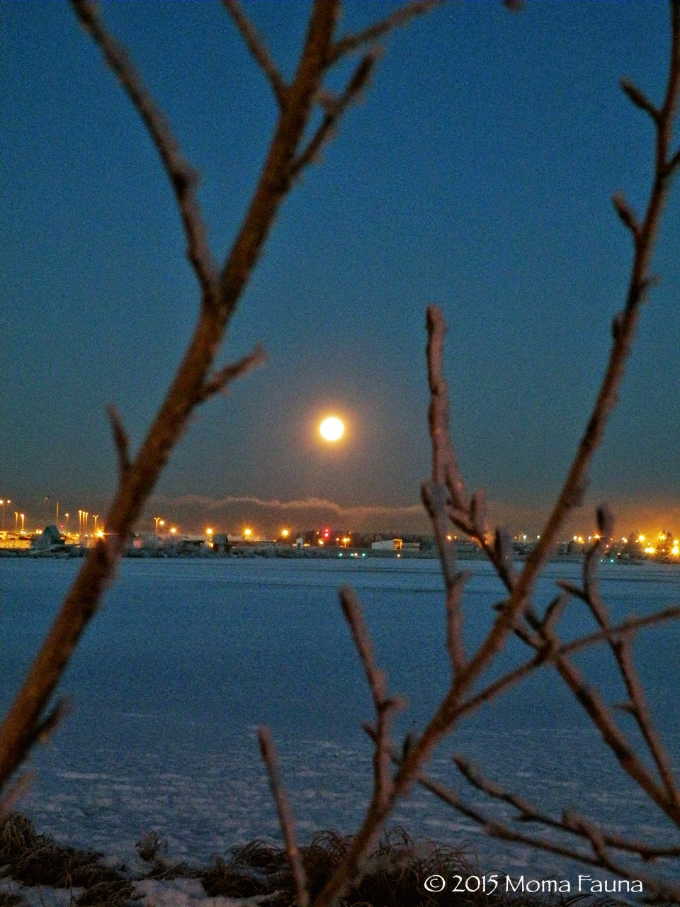 Moon: Fat & sassy as seen from the hoarfrosted edge of Lake Hood.