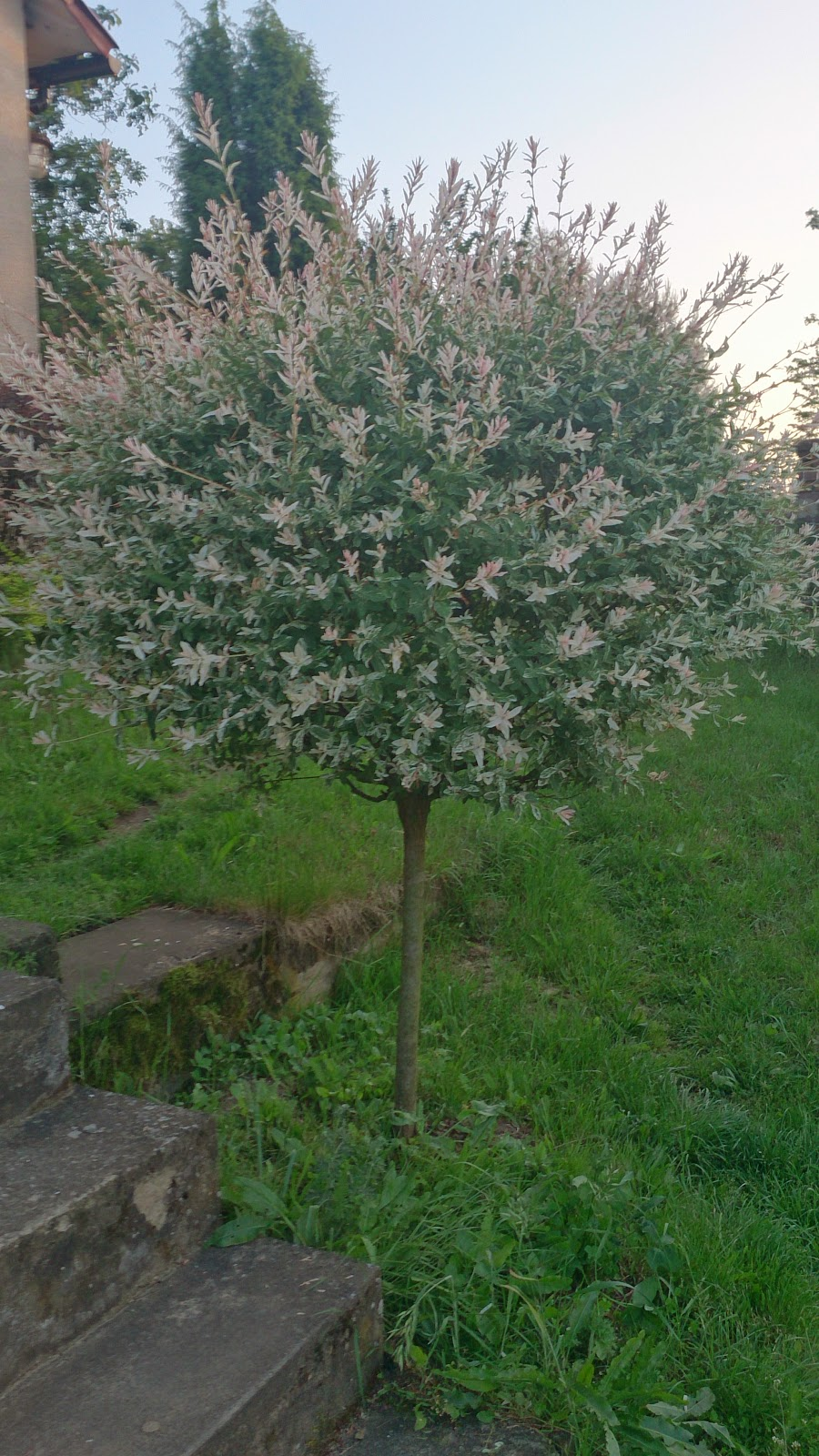 piękna kula wczesną wiosną