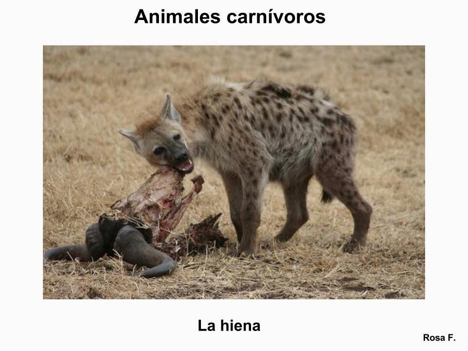 de Primaria: Animales carnívoros. Vocabulario en imágenes listo para