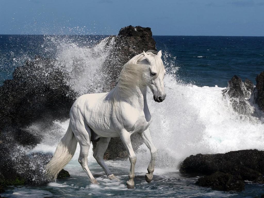Imagens De Cavalos Com Mensagens Bonitas