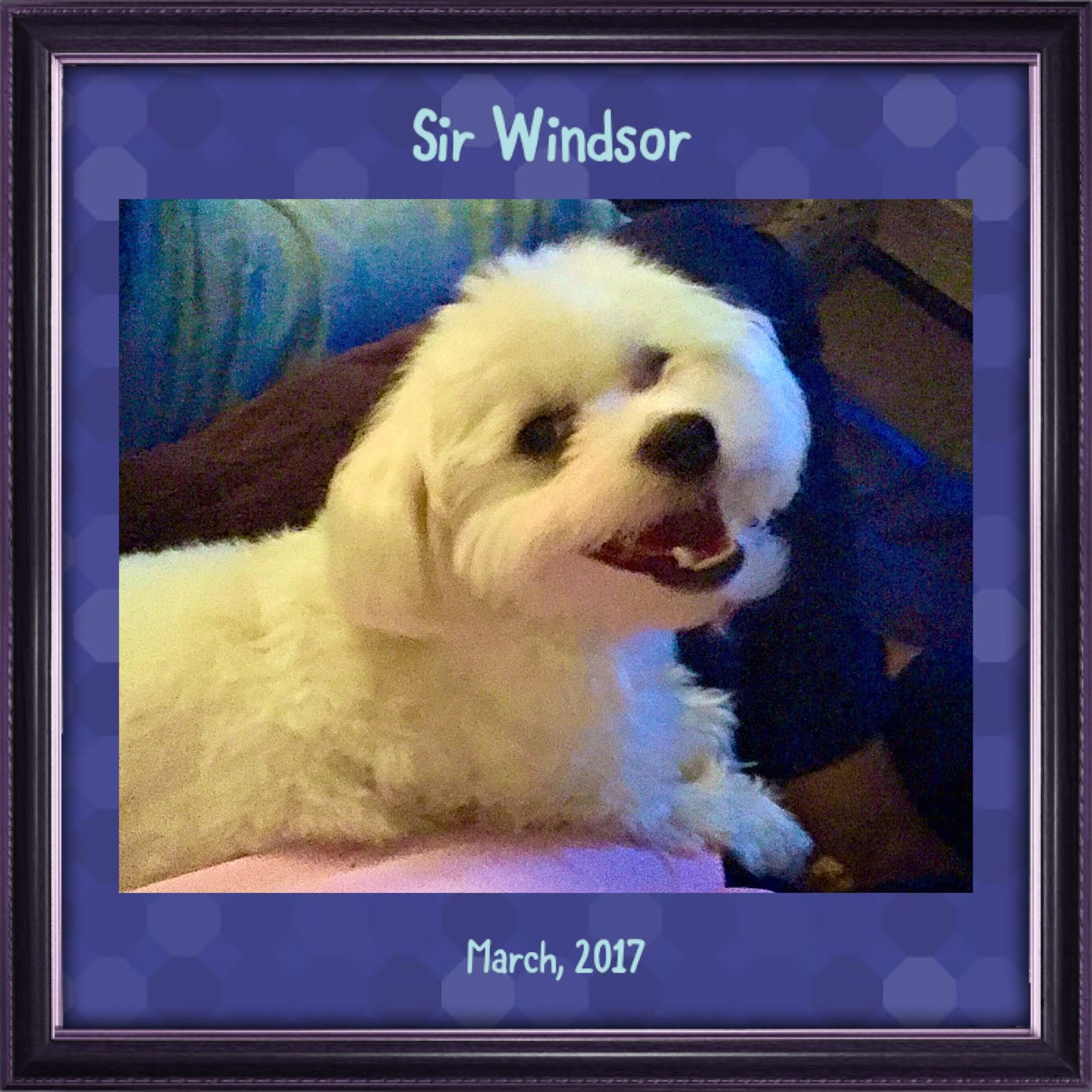 Sir Windsor