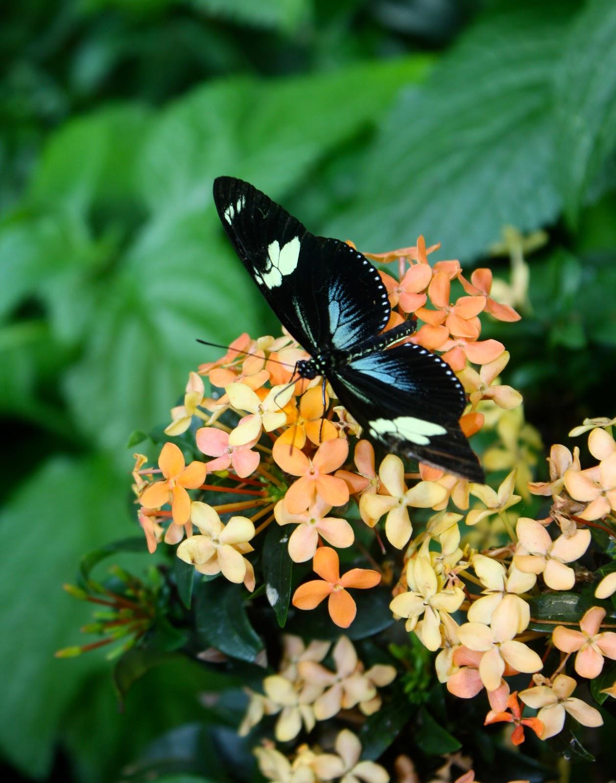 Museum Of Science, Boston   Butterfly Garden