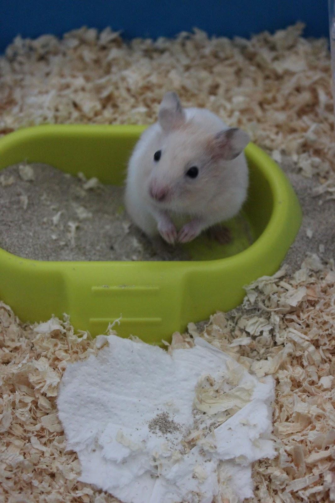 Deuntje De Hamster