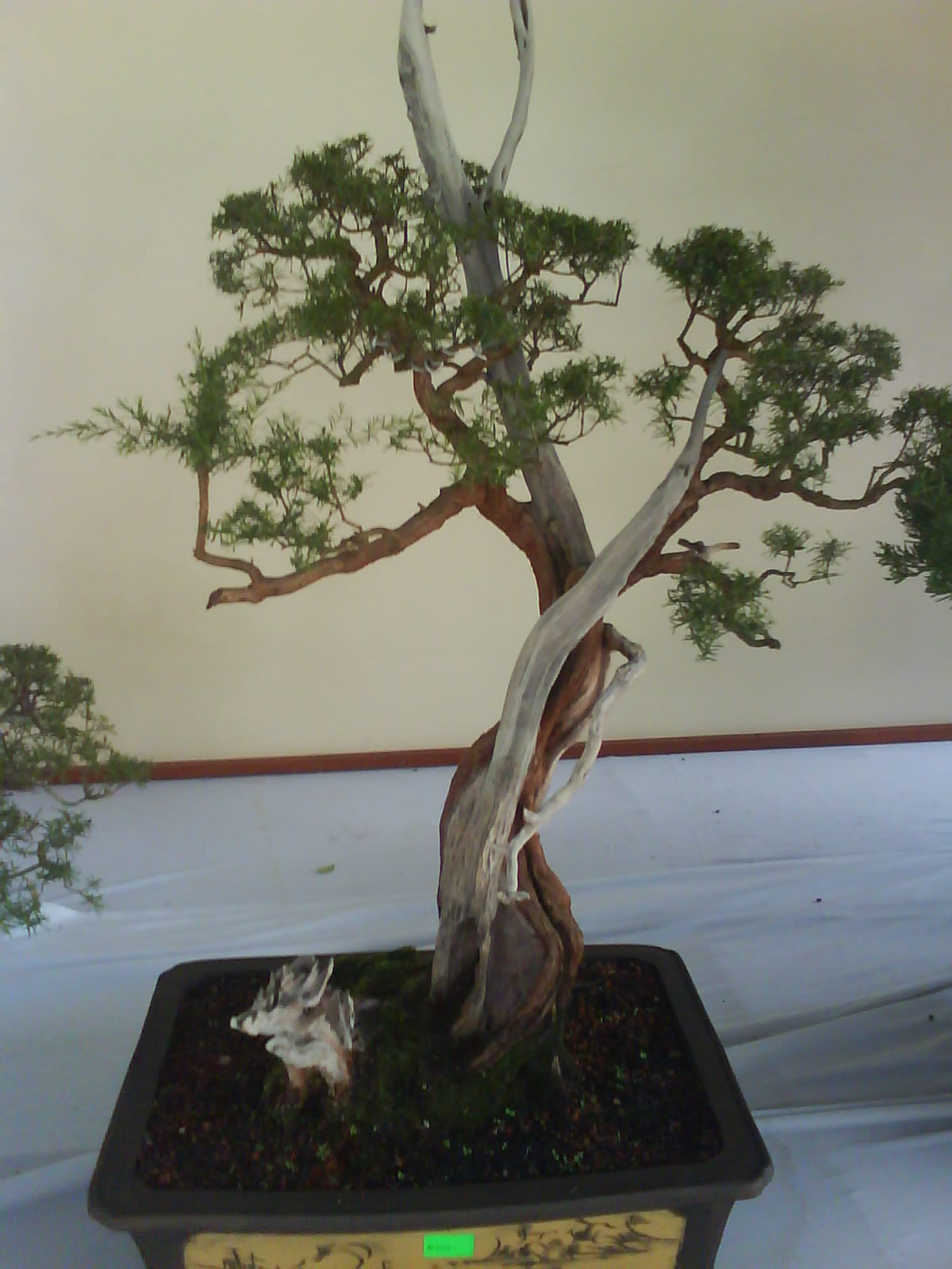 Garden Chronicles Kuala Lumpur Bonsai Amp Orchid Show 2012