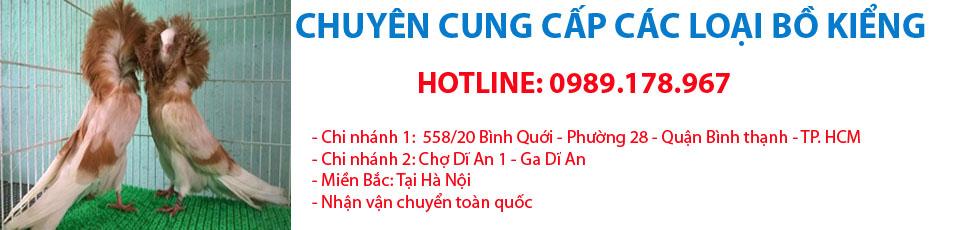 BÁN BỒ CÂU KIỂNG ĐẸP GIÁ RẺ TẠI HỒ CHÍ MINH - Hotline  0989.178.967