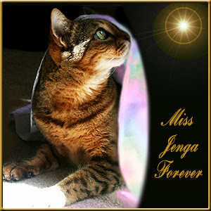New Rainbow Bridge Angel