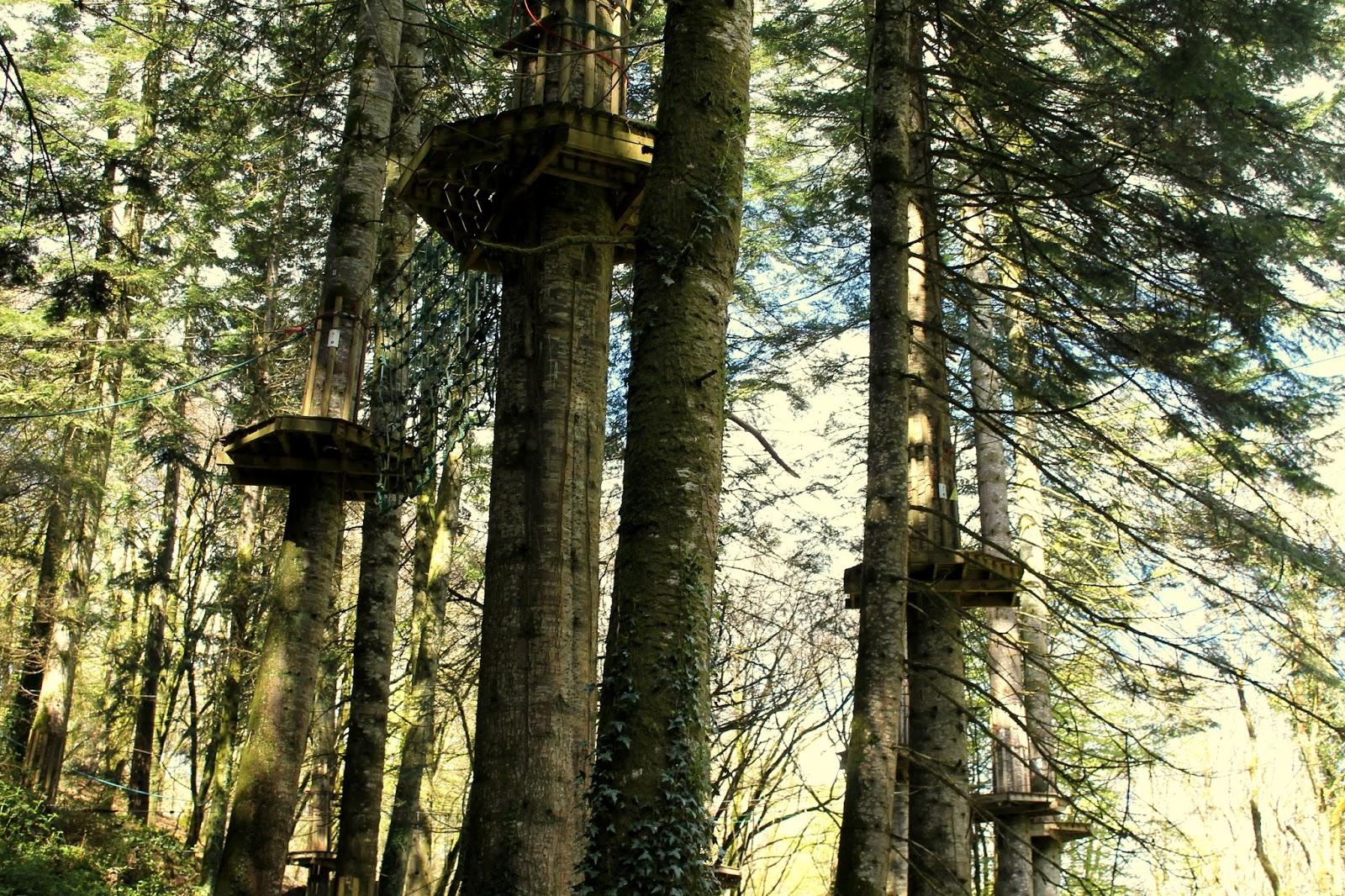 bluestone wales tree top activities