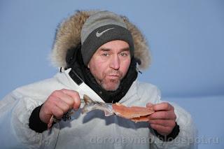 А на полярке сейчас макароны. Остров Вайгач. Ненецкий автономный округ. Природа НАО.