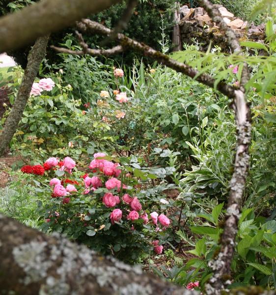 fen tre sur mon jardin le blog de mon doubs jardin. Black Bedroom Furniture Sets. Home Design Ideas