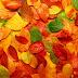 Imagem de Fundo - Folhas em tons vermelho, laranja, amarelo e verde