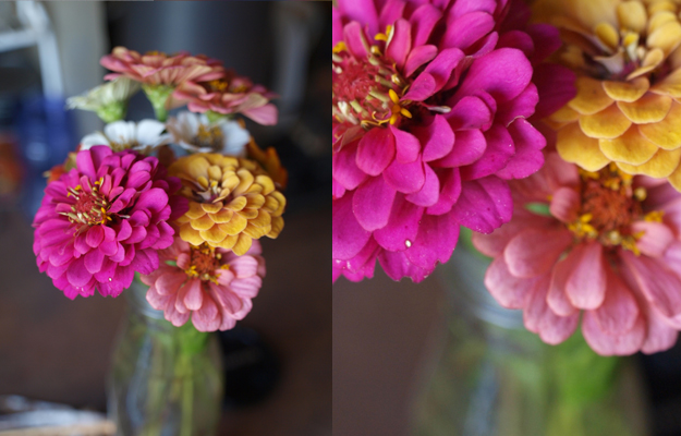 Grow Wedding Zinnias
