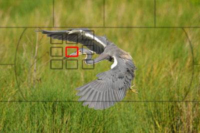 Dynamic-AF-Area-Mode.jpg