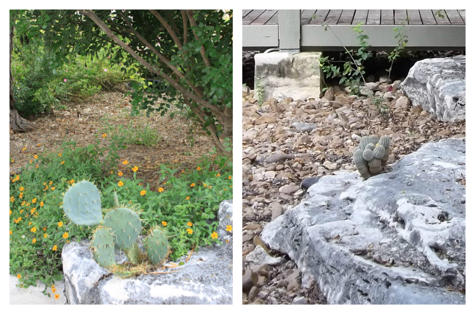 Rock Oak Deer Watersaver Landscape Tour Wildscape In Alamo Heights