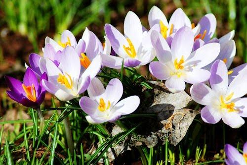 Nuevas flores de primavera - New spring flowers (1920x1200)