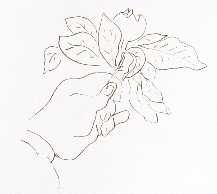 Matisse Contour Line Drawing : Nc a t art fall contour line