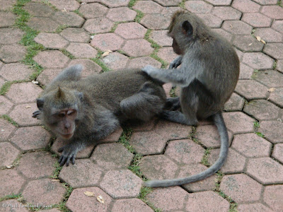 Ubud Monkey Forest Bali Photo 8