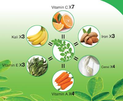 Những tác dụng của rau cây chùm ngây