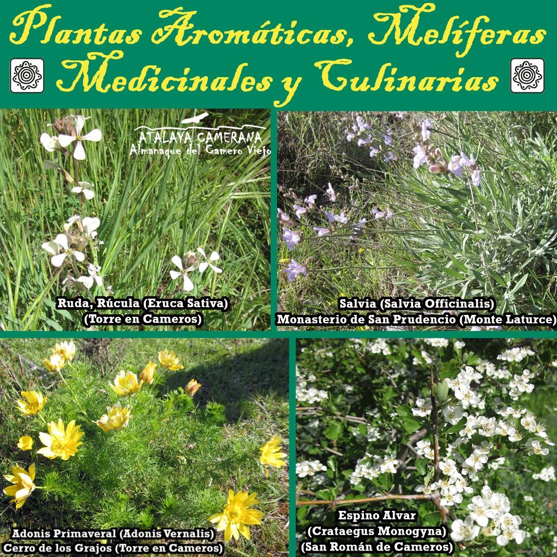 Sierra del Camero Viejo - Valle del Leza. Patrimonio Cultural y Natural. Plantas Aromáticas, Melíferas, Medicinales y Culinarias
