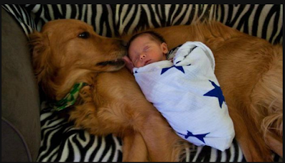 Photo; Dog Receives Heroic Recognition After Saving A Premature Baby From A Refuse Dump