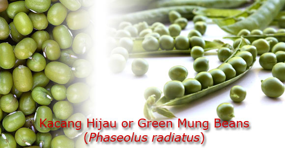 Herbal | Green mung beans | Phaseolus radiatus