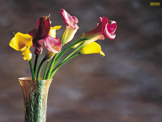 Hình ảnh hoa đẹp 01