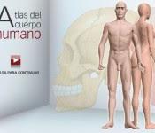 Atlas de anatomía del cuerpo humano