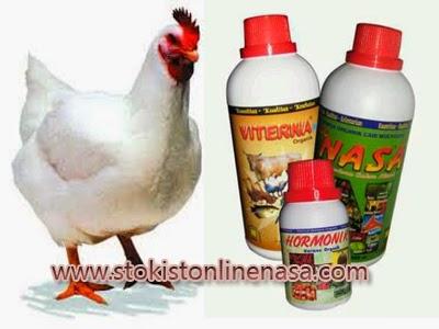 cara-budidaya-ayam-potong-produk-nasa-viterna-poc-nasa-hormonik