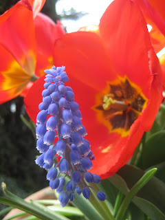 Red and blue flowers in the gardens of Villa D'Este