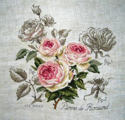 """Rose """"Pierre de Ronsard"""" V.Enginger"""