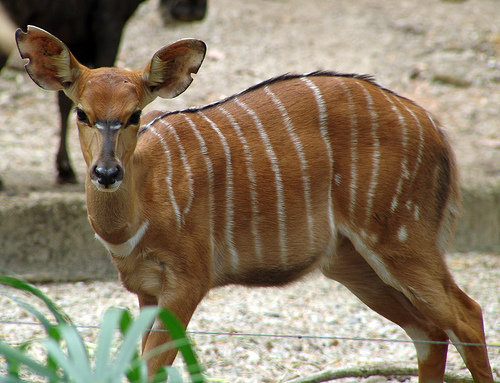 ... Awesome Animals Whose Names Start with The Letter N ~ Amazing Animals