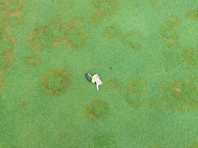 Summer patch symptoms on creeping bentgrass