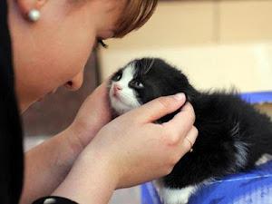 Nunca abandone os animais de estimação, pois eles sentem tristeza, como você!