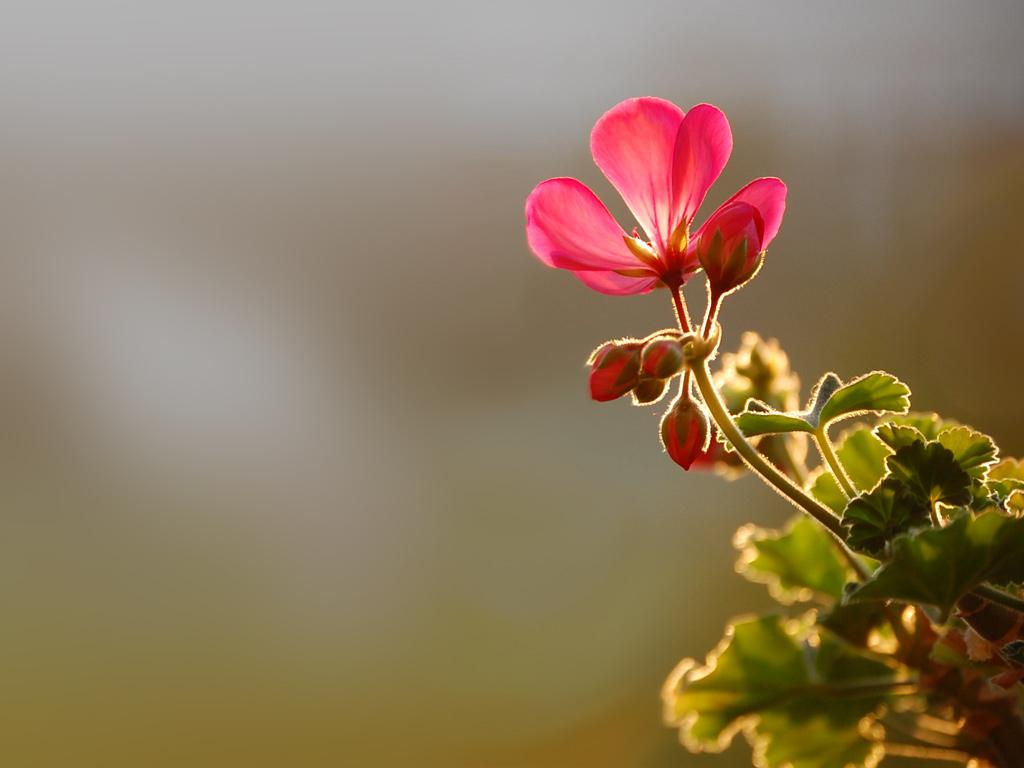 http://1.bp.blogspot.com/-qd_HavBqp-s/T8zIsr4AJHI/AAAAAAAAEko/Gl5LOx-HyH8/s1600/Flower-wallpaper-47.jpg