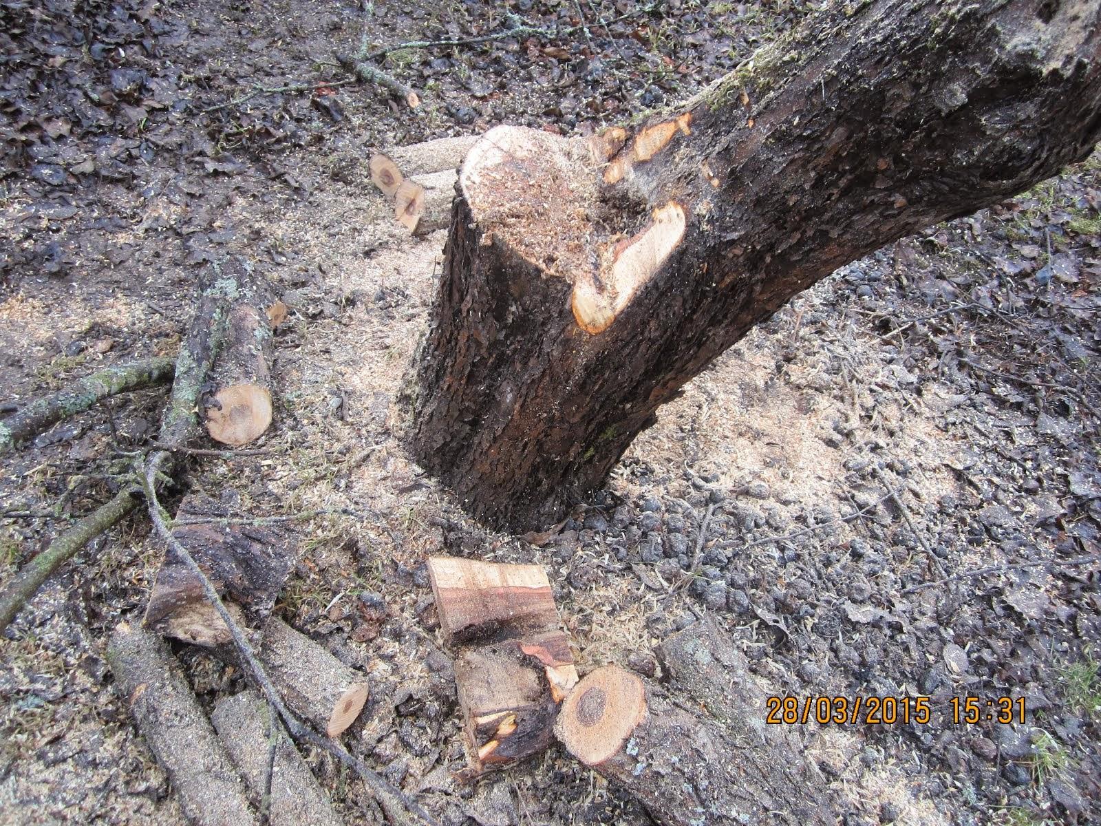 Omenapuiden hoitoleikkaukset / omenapuiden kevätleikkaukset ja rajummatkin poistot ja puiden kaadot