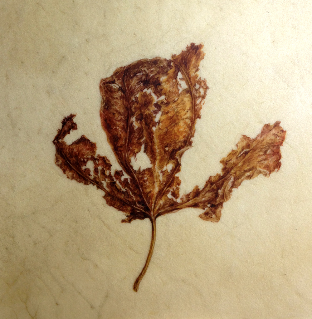 Decaying leaf painting, watercolour on vellum