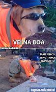 Home » fotos de cachorros , Imagens de cachorros » mensagens para. (problem)