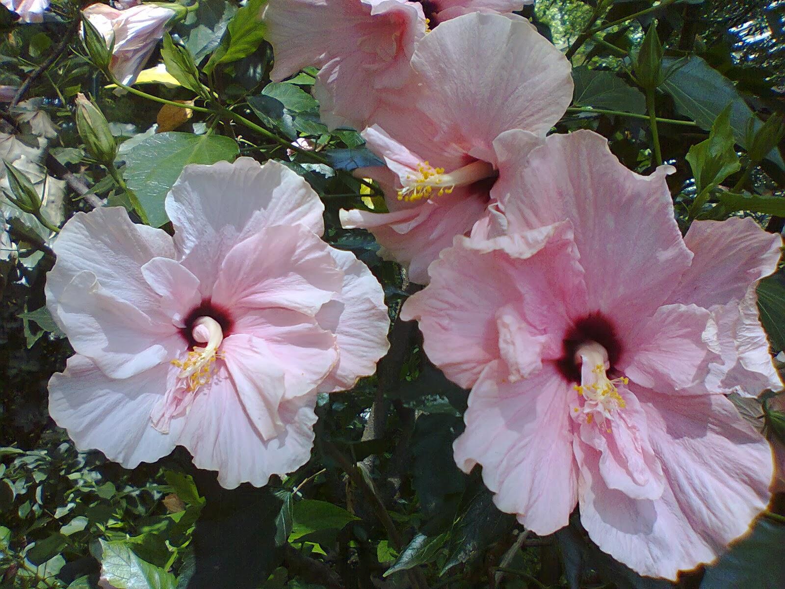 Flores que nos rodean